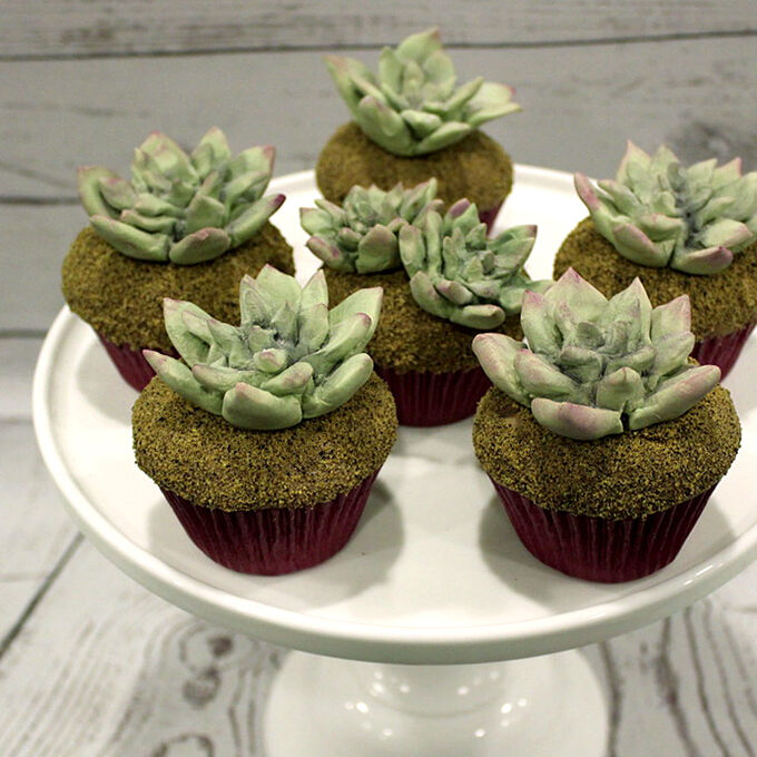 Fondant Succulent Cupcake Workshop