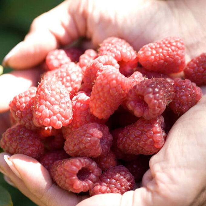 Raspberry-Cherry Crumble Bars