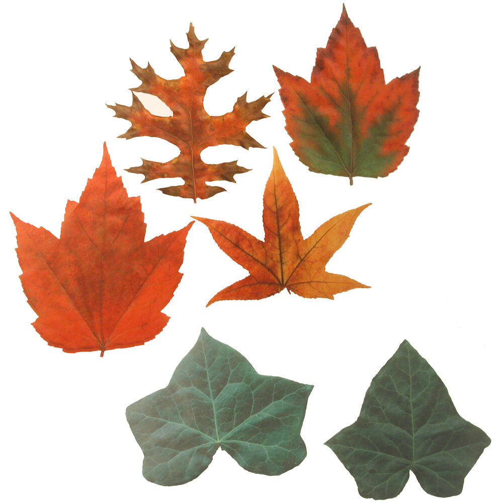 Parchment-Paper Leaves, Set of 20