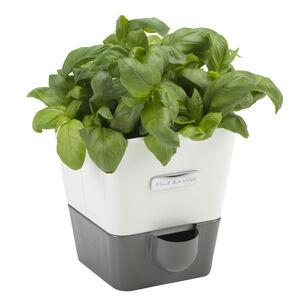 Cole & Mason Self-Watering Indoor Herb Garden Planter