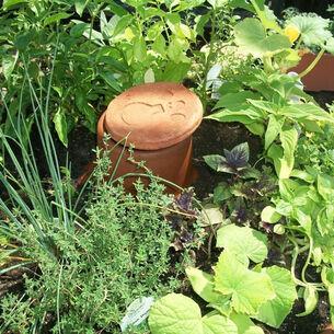 LadyBagsSF Olla Plant Watering Jar