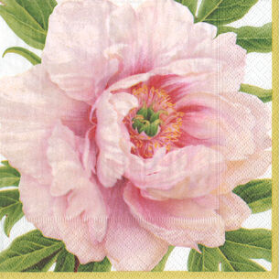 Peony Blush Cocktail Napkin, Set of 15