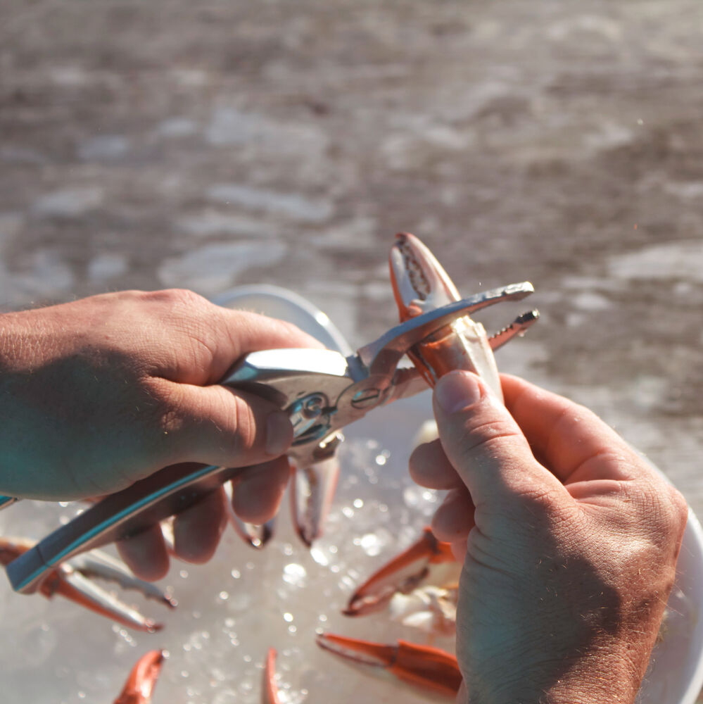 Toadfish Crab Claw Cutter