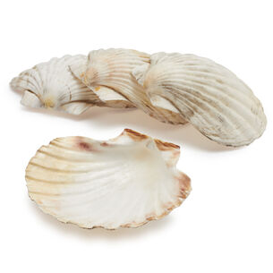 Sur La Table King Scallop Grilling Shells, Set of 4