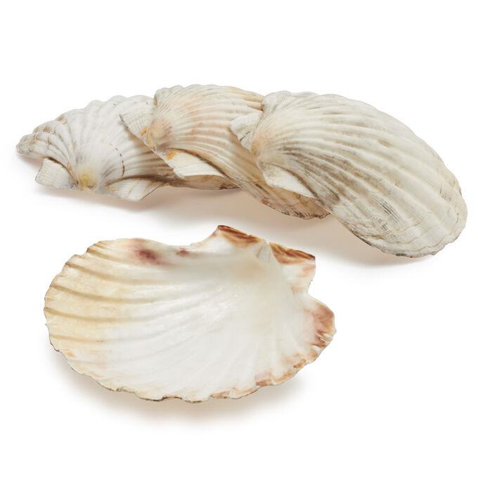 Sur La Table King Scallop Grilling Shells Set Of 4 Sur La Table